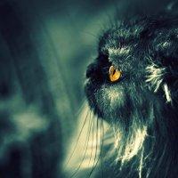 прибор ночного видения :: Сергей Розанов