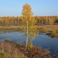 Золотая осень :: Борис Гуревич