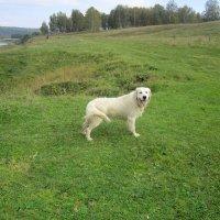 Весёлая собака . :: Мила Бовкун