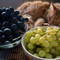 Виноград и Персик :: Елена Федотова