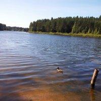 Утро на реке Оредеж. :: Жанна Викторовна