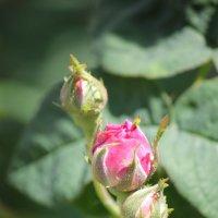Цветочный хоровод-568. :: Руслан Грицунь