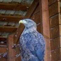 Парк птиц Воробьи :: Елена Виноградова