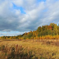 В багрец и золото одетые леса :: Павлова Татьяна Павлова