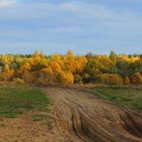 В багрец и золото одетые леса...... :: Павлова Татьяна Павлова