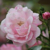 Цветочный хоровод-571. :: Руслан Грицунь