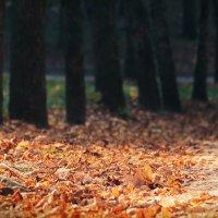 Осенний парк :: Nyusha