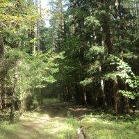 Вчера в моём любимом  Подмосковном лесу.... :: Ольга Кривых