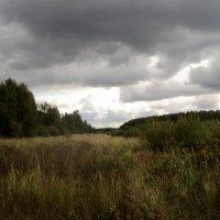 Моё необъятное и красивое Подмосковье! :: Ольга Кривых