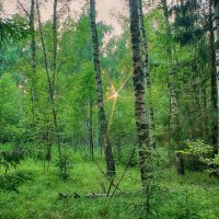Ранний вечер в лесу... :: марк
