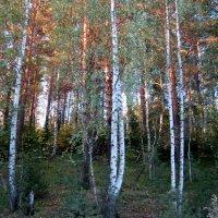 Осенние лучики заката, прячутся в деревьях. :: Любовь Иванова