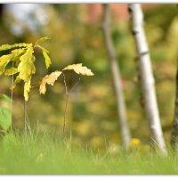 Листья жёлтые... уже :: Василий Хорошев