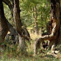 Собрание старейшин леса :: Dr. Olver  ( ОлегЪ )
