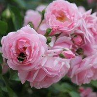 Цветочный хоровод-580. :: Руслан Грицунь