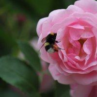 Цветочный хоровод-577. :: Руслан Грицунь