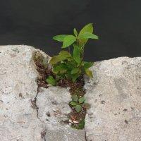 И на камнях растет трава :: Андрей Лукьянов