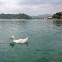 Озеро :: Mila
