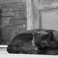 Просто кот :: Людмила Волдыкова