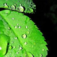 А дождь идет... :: TATYANA PODYMA