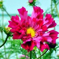 цветочный рупор :: vg154