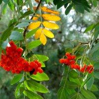 Раскрасила осень... :: Тамара (st.tamara)