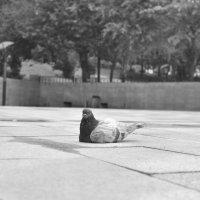 Одиночество :: Мария Исаева