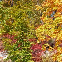 Осень :: Владимир Салапонов