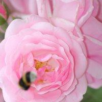 Цветочный хоровод-582. :: Руслан Грицунь
