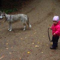 Красная курточка и НЕ серый волк :: Андрей Лукьянов