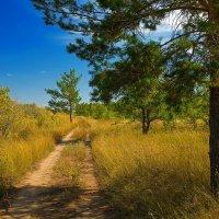 дорога в лес :: александр лебеденко