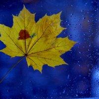осень... :: ирэн