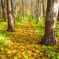 осенний лес :: Надежда