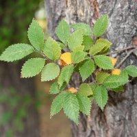 осень.. прогулка.. листья.. :: Екатерина