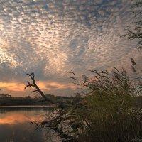 Одинокая ветка и уходящее солнце :: Olga Zhukova