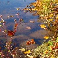 Осень :: Grey Bishop