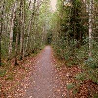По лесной тропинке.... :: Валентина Жукова