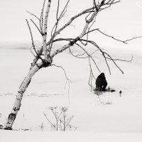 Два одиночества :: Владимир Лисаев