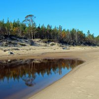 Летний берег Белого моря. Солза. Прибрежный лес :: Владимир Шибинский
