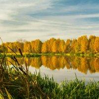 Золотая осень :: Михаил Пименов