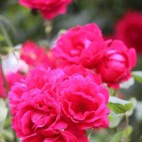 Цветочный хоровод-589. :: Руслан Грицунь