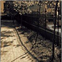 My magic Petersburg_01494  в Таврическом саду :: Станислав Лебединский