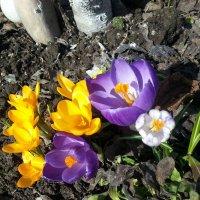 цветы :: Виктория Иванова