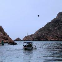 На рыбалку :: Марина Дегтярева