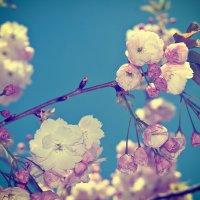 Весна N2 :: Евгений {K}