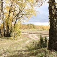 Осень :: Анастасия Шаронова