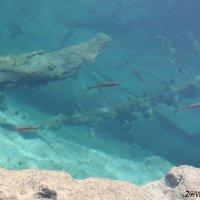 Подводная Одиссея :: Дмитрий Дмитрий