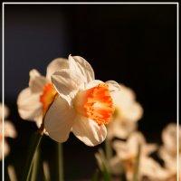 Цветок :: Андрей Бойко