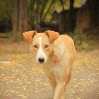 Собака :: Егор Василихин