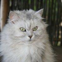 Кошка на крылечке :: Ольга Белёва