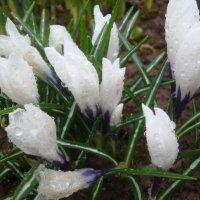 Весенний дождь :: Mariya laimite